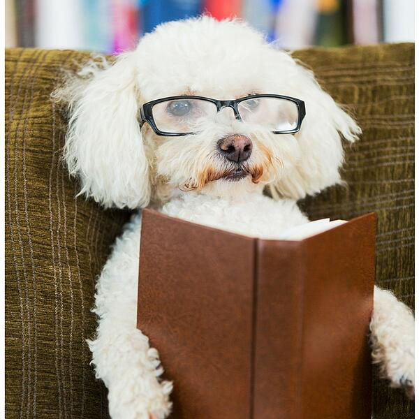 Reading with your dog is soothing
