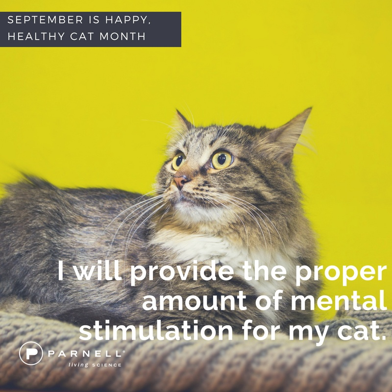 September as Happy, Healthy Cat Month