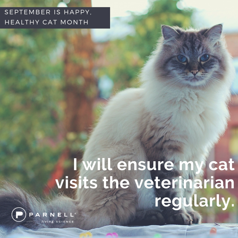 3 - be sure they go to the vet!
