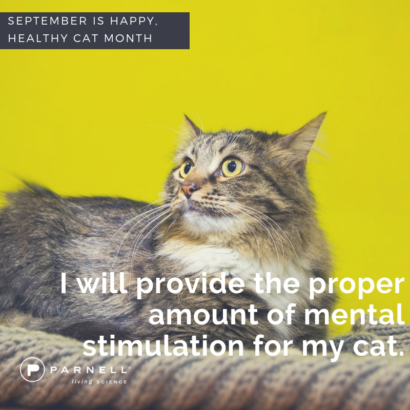 4 mental stimulation for cats