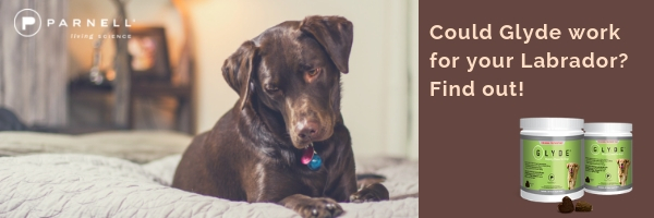 Could Glyde work for your Labrado?  Find OUT Now.