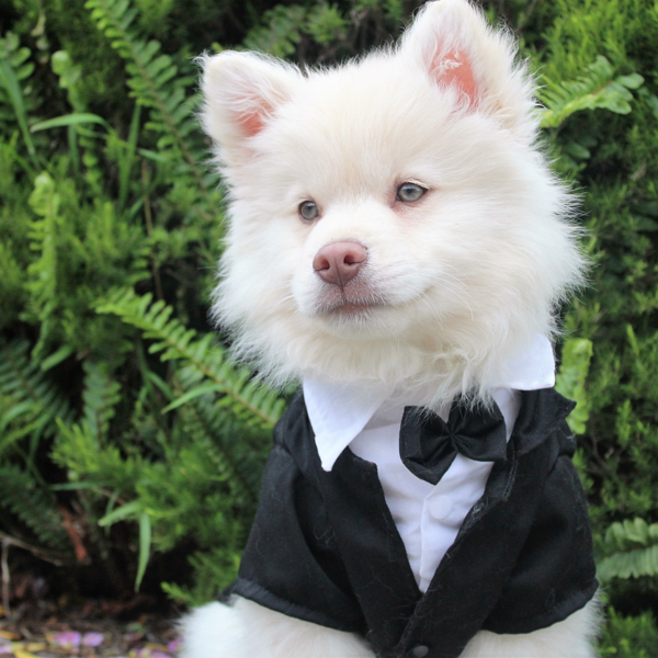 Tuxedo for your dog? Yes please