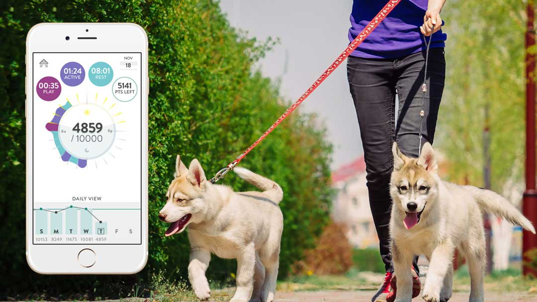 Track your dog's steps with FItBark