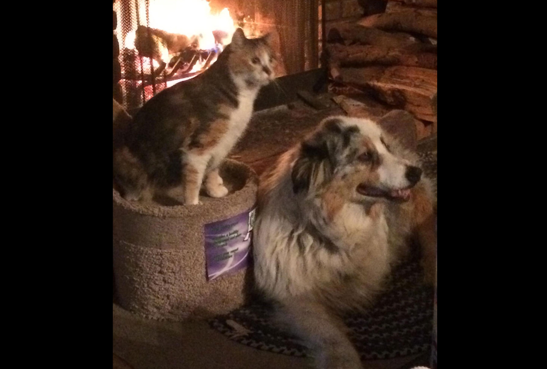 Huckleberry by the fire
