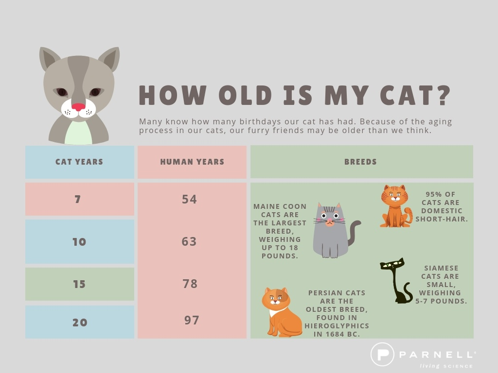How Old is My Cat?