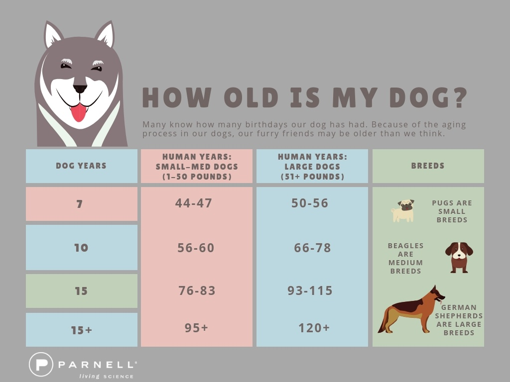 How Old is My dog?