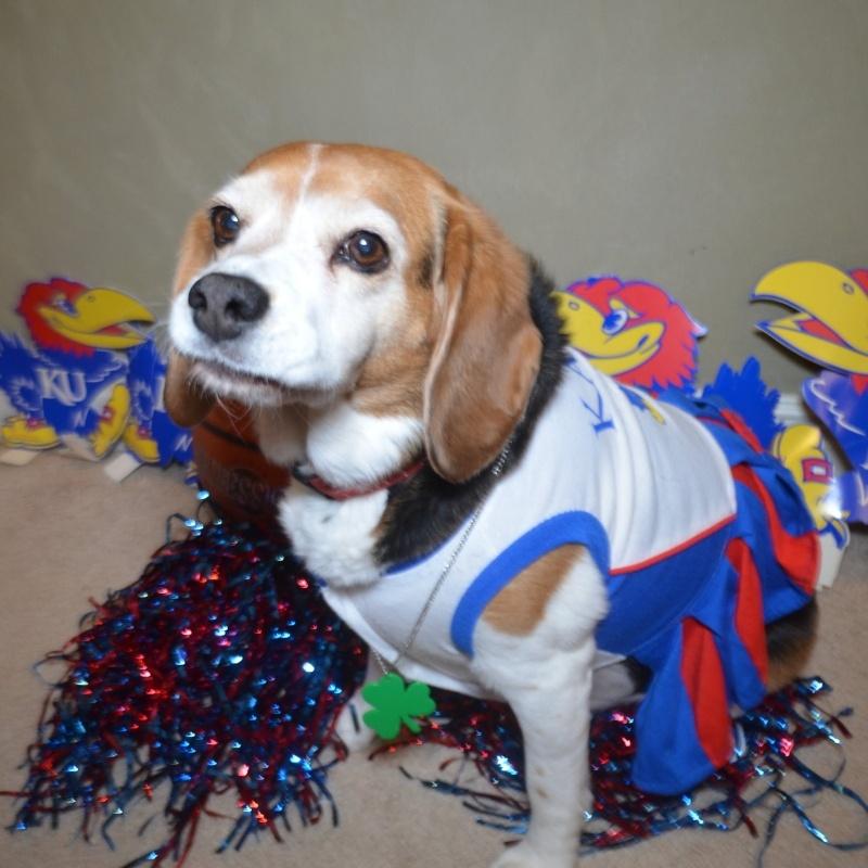Lucky Beagle
