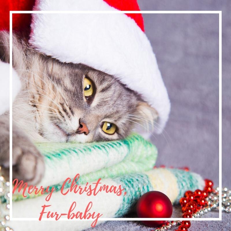 Meowy Christmas. Cat!