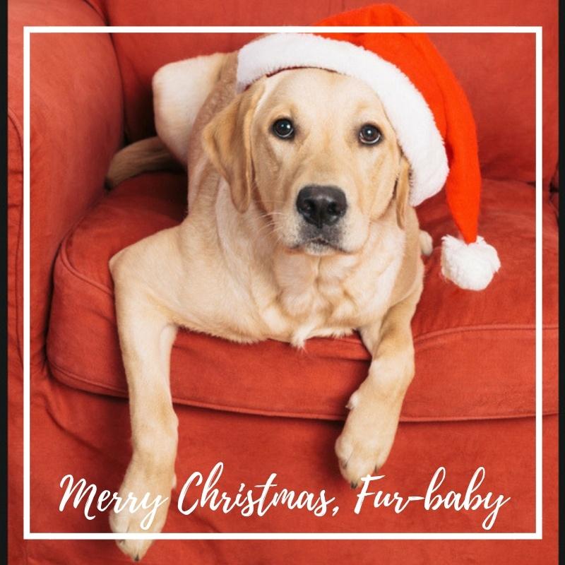 Merry Christmas Doggy!
