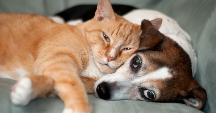 It's National Pet Month! Celebrate your dog and cat!