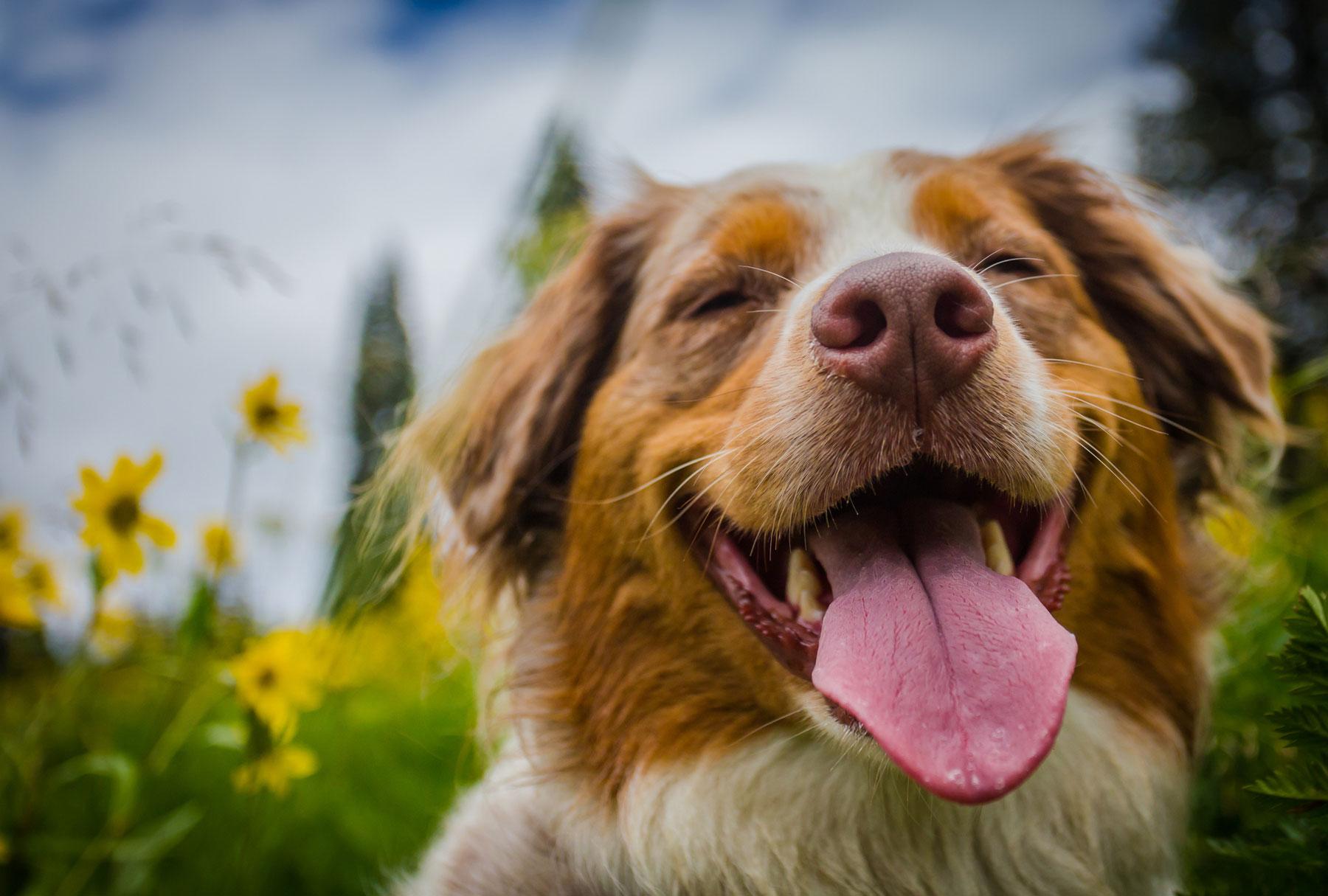 We love senior dogs!