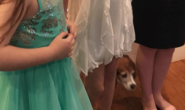 Oscar party with the dog
