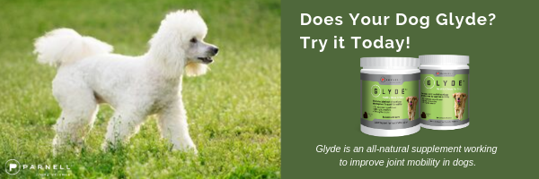 Poodle Dog Glyde