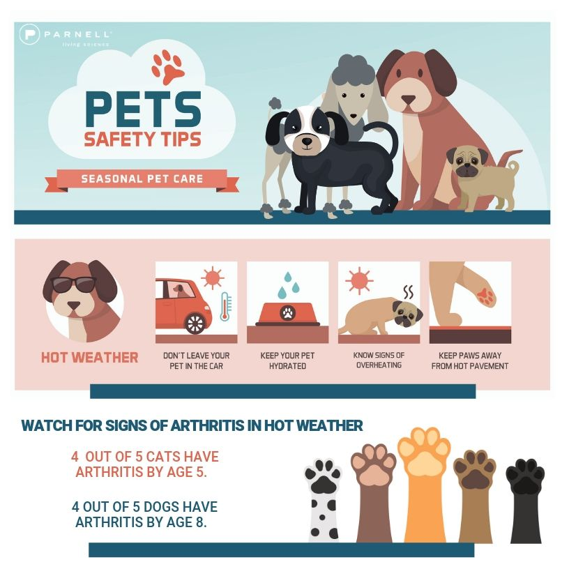 Signs of ARTHRITIS in dogs and cats