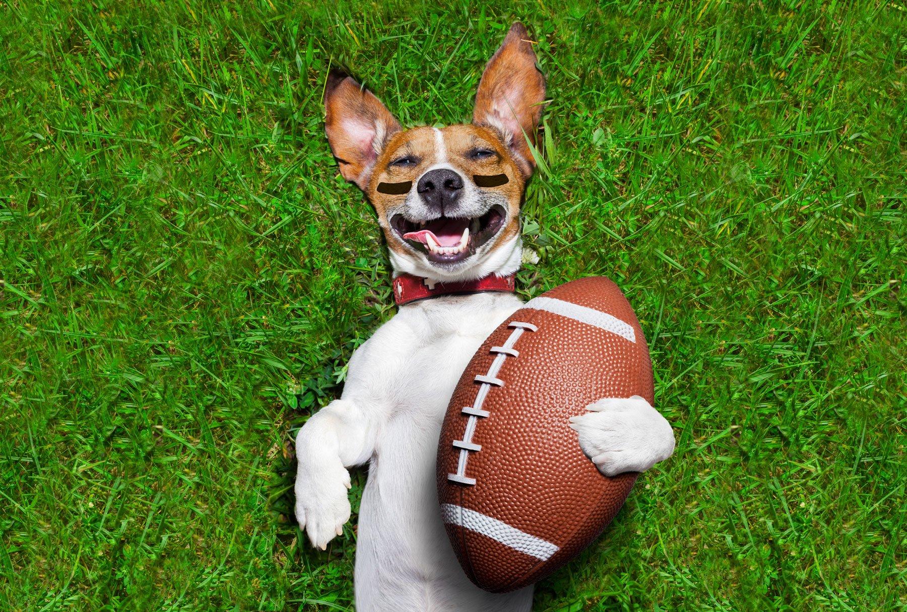 Super-Bowl-Sunday-Pet-Style