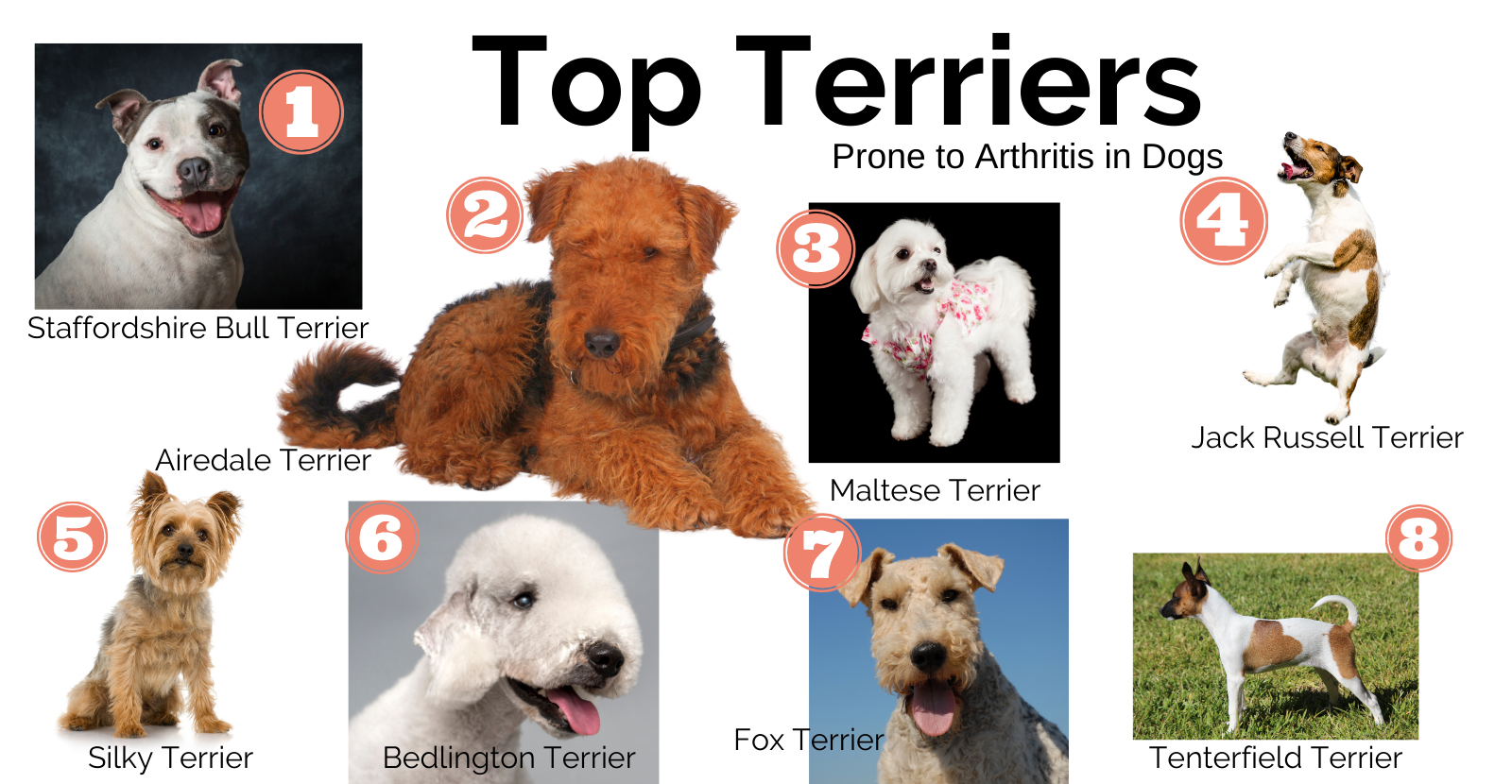 Terrier Blog infographic