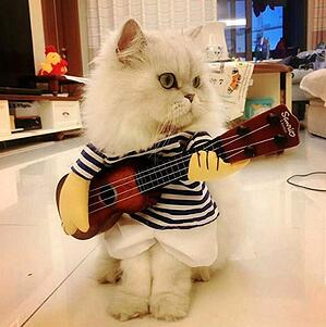 cat costume 1