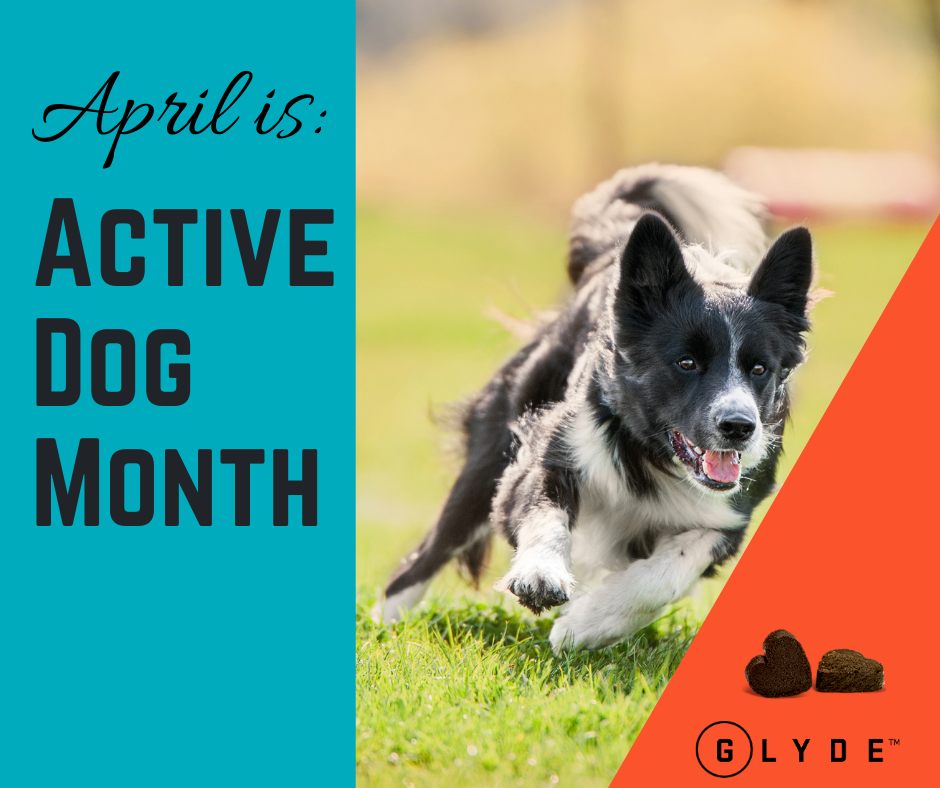 Active Dogs are Glyde Dogs