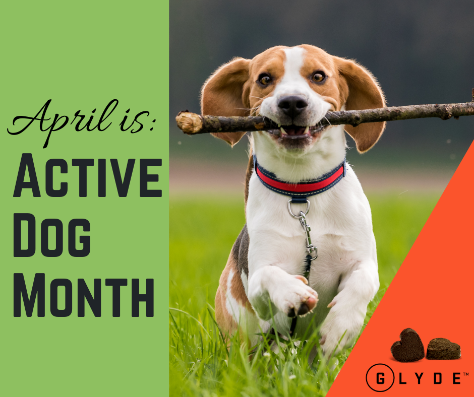 Active Dog Month