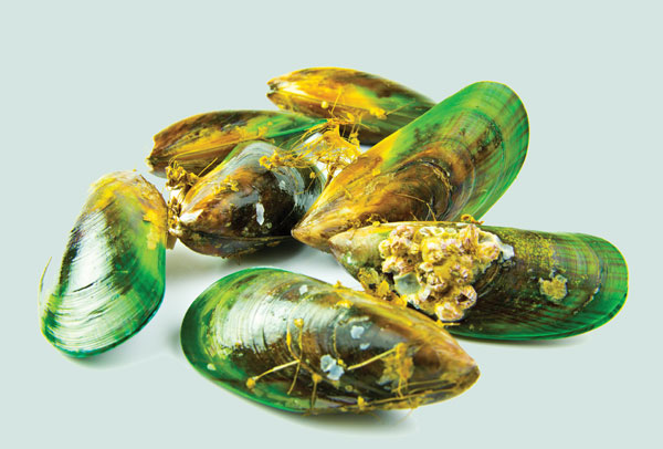 Green-Lipped-Mussels