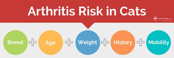 cat-arthritis-risk-email-banner