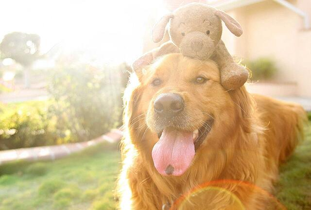 Chuiy-with-animal-on-head.jpg