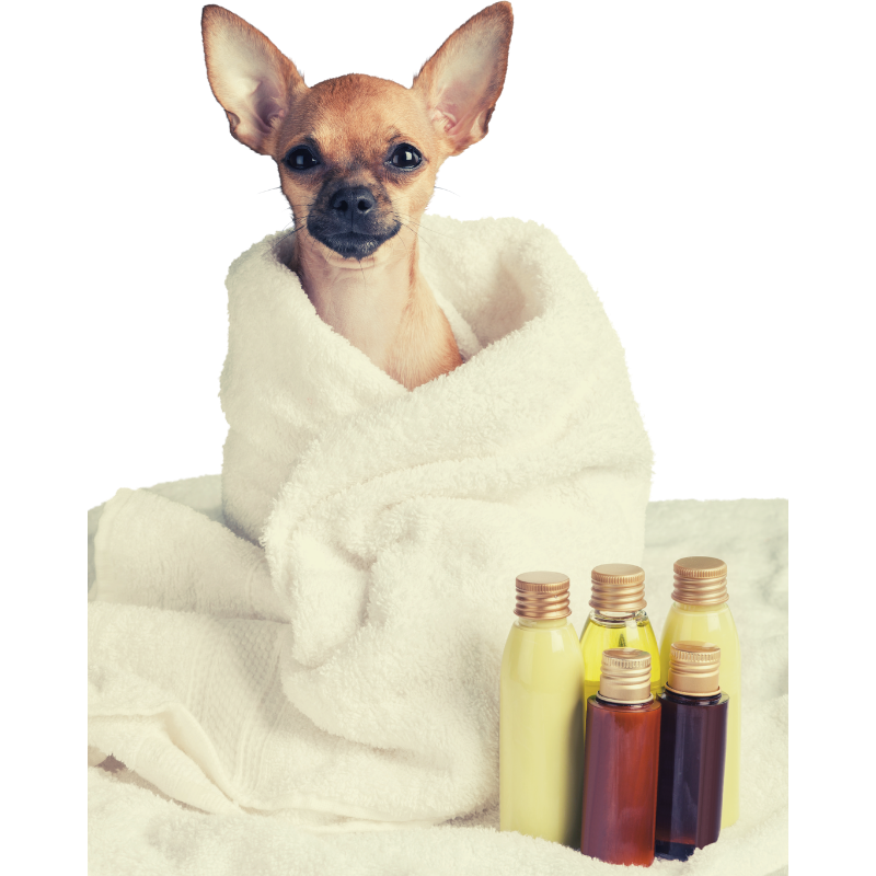 Spa day with your dog