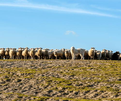 Herding GP