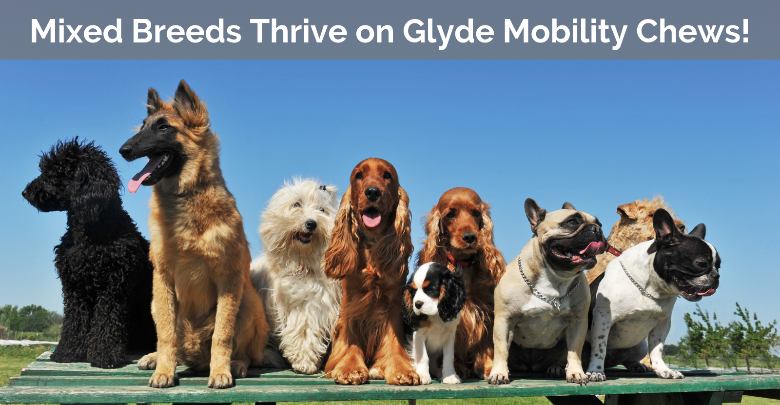 Mixed Breeds thrive on Glyde!