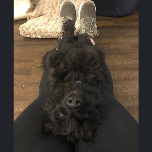 Watson on her lap