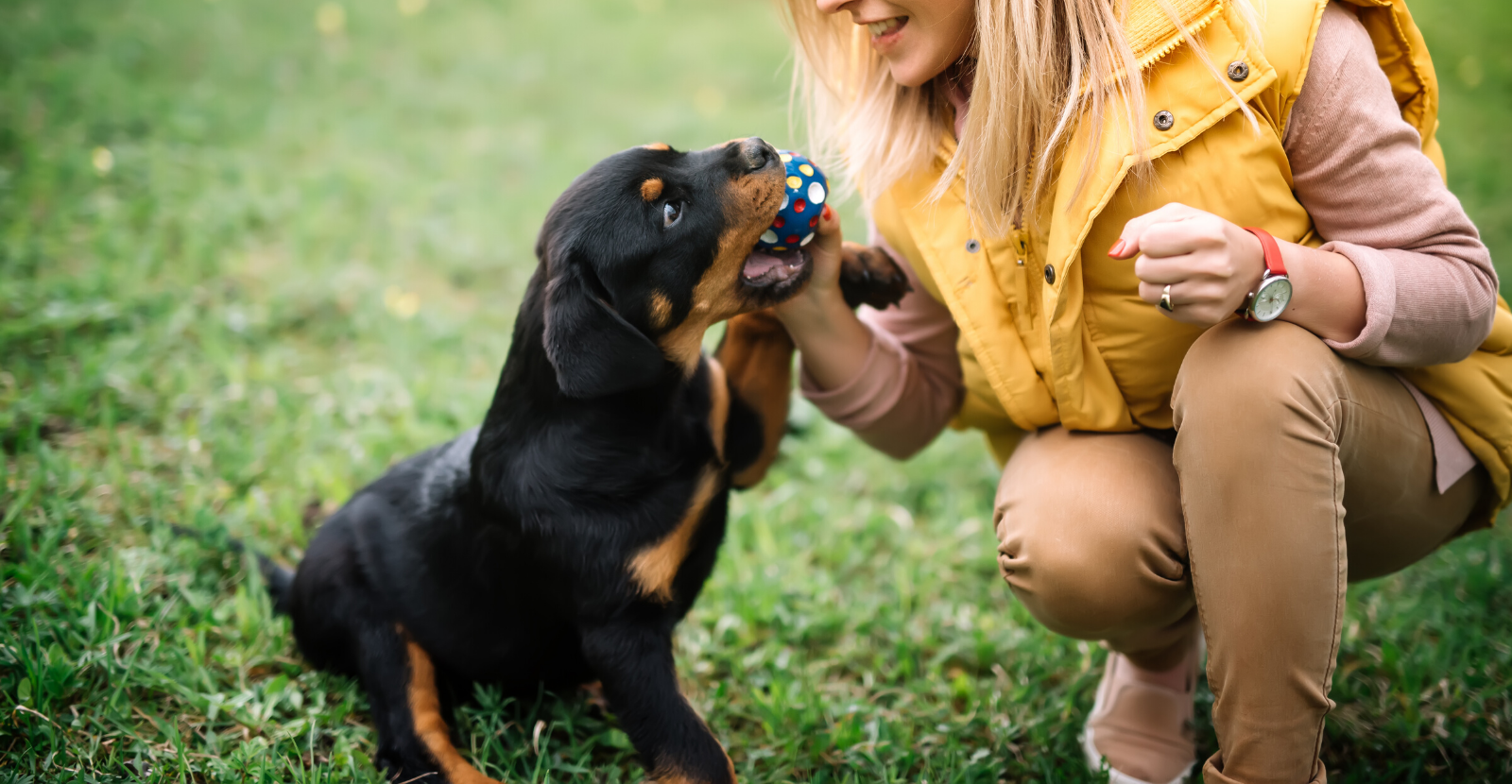 Playful Puppy Rottie