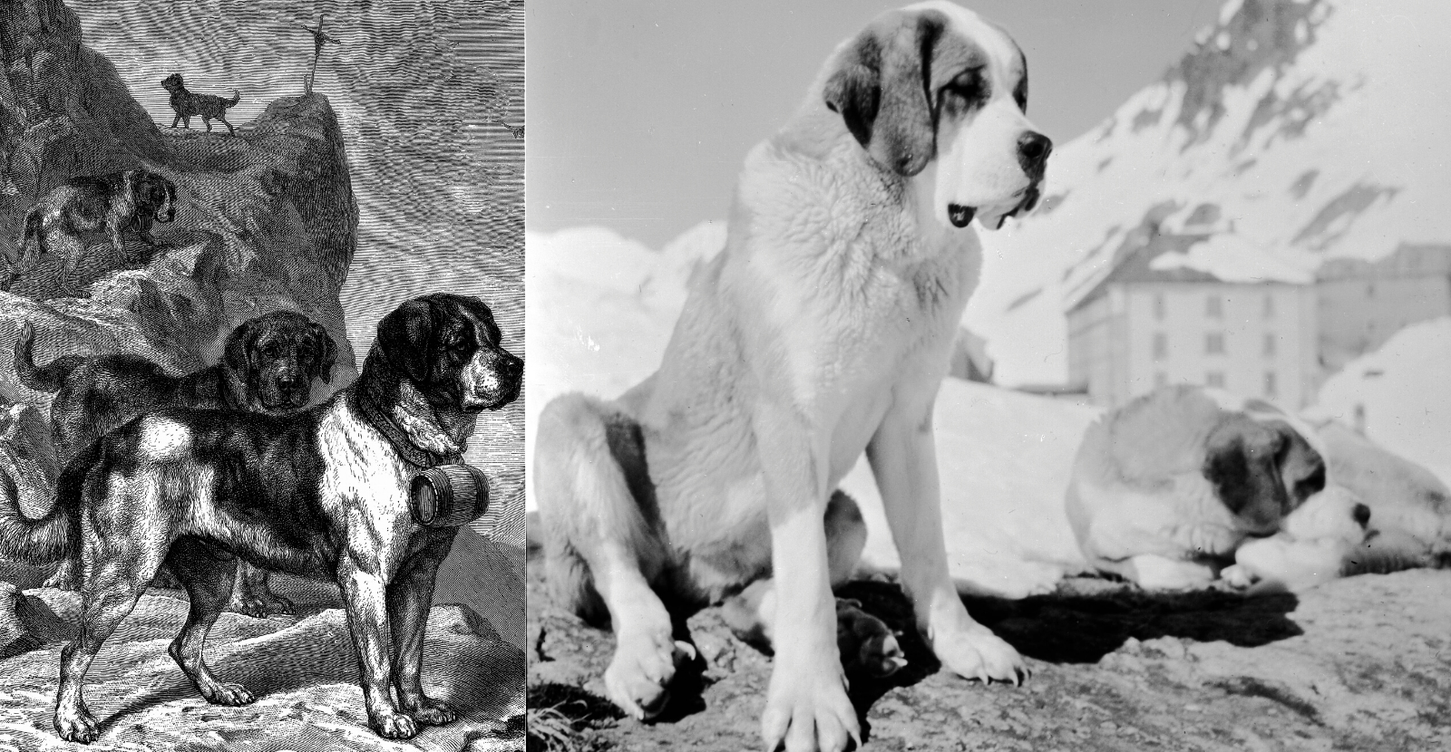 Historic images of Saint Bernard