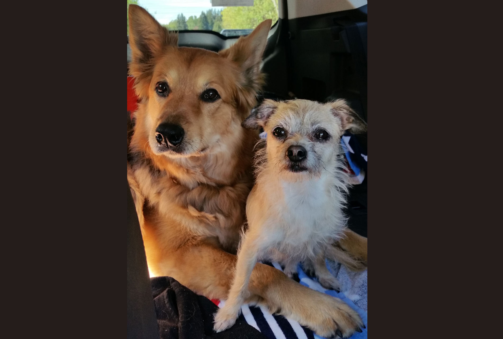 Sakari & Chloe have arthritis in dogs but it doesn't slow them down thanks to Glyde!