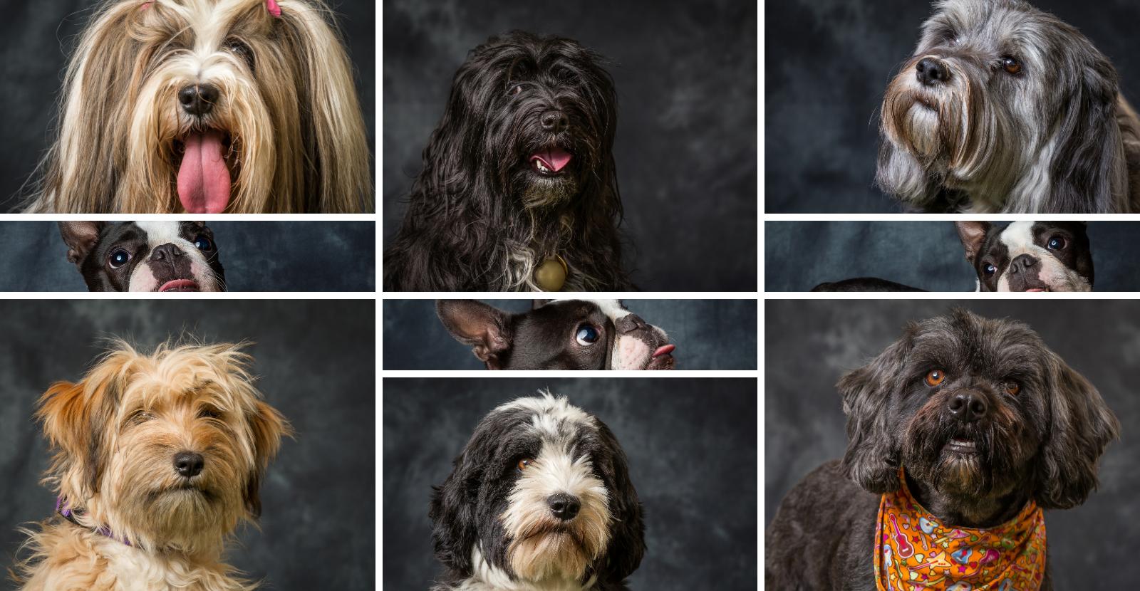 Lots of variety in terriers
