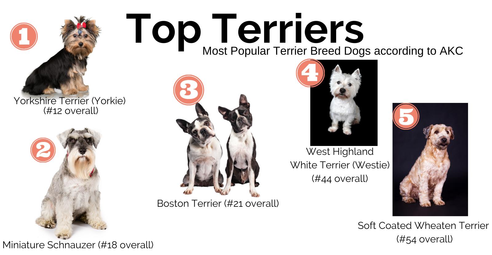 Terrier Blog