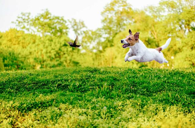 dog-running-to-catch-bird.jpg