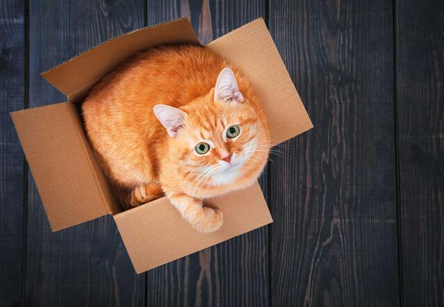 Cat with arthritis in box