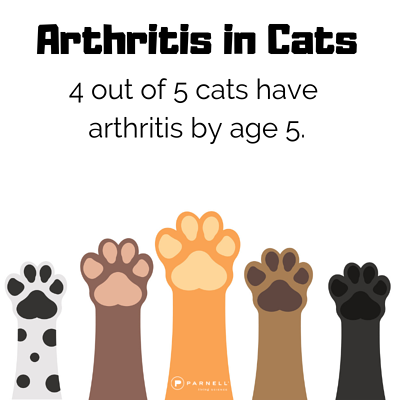 4 in 5 cats have arthritis in cats