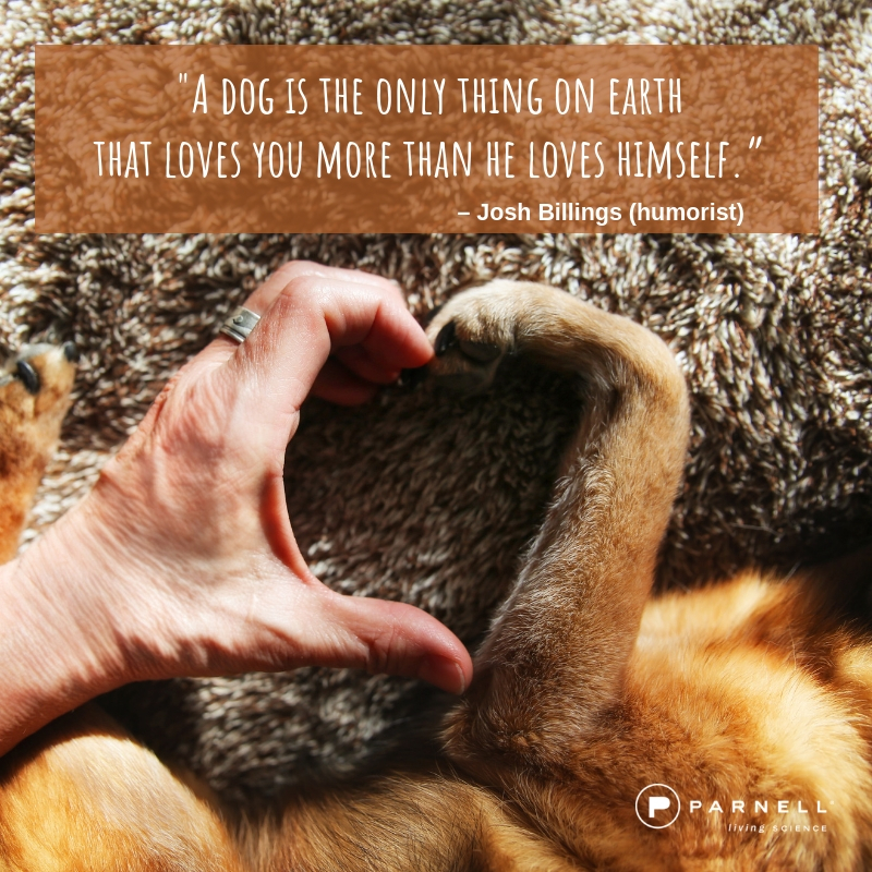 dog quotes (1)