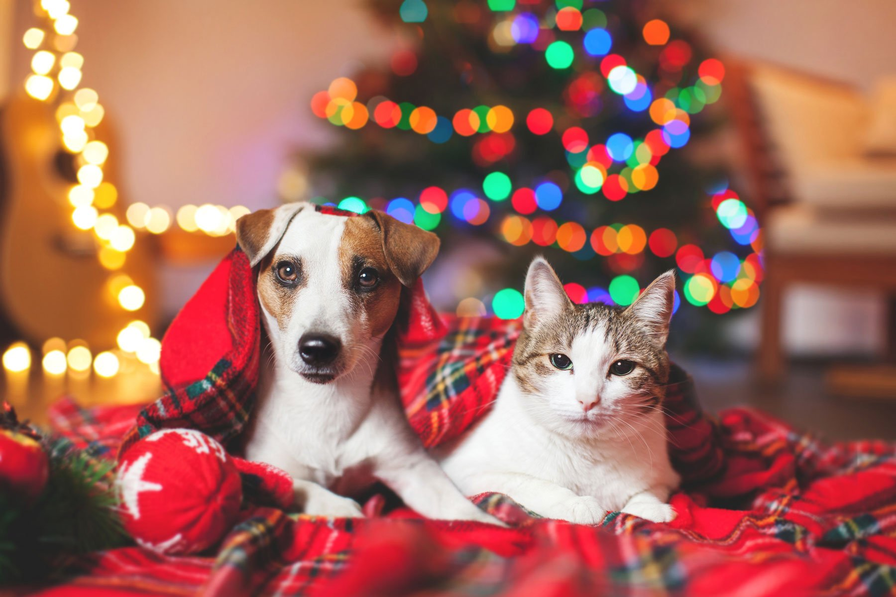 Holiday Stress? Just Pet Your Cat or Dog!