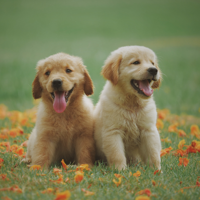 We love puppies!