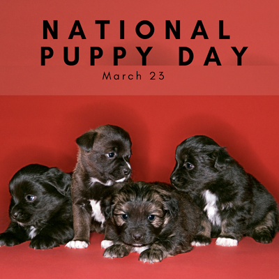 National Puppy Day!