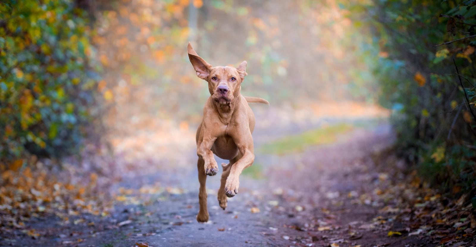 run with glucosamine