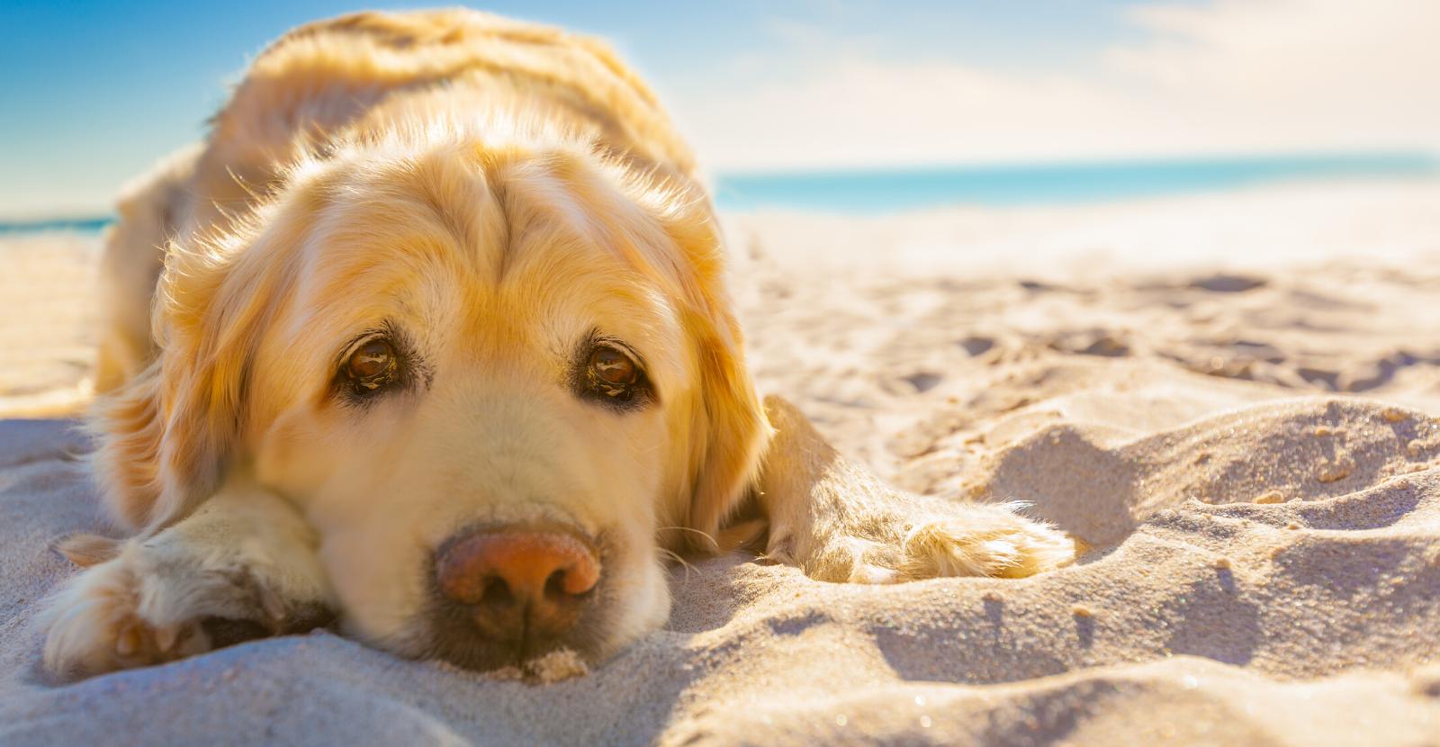 senior dog care AU