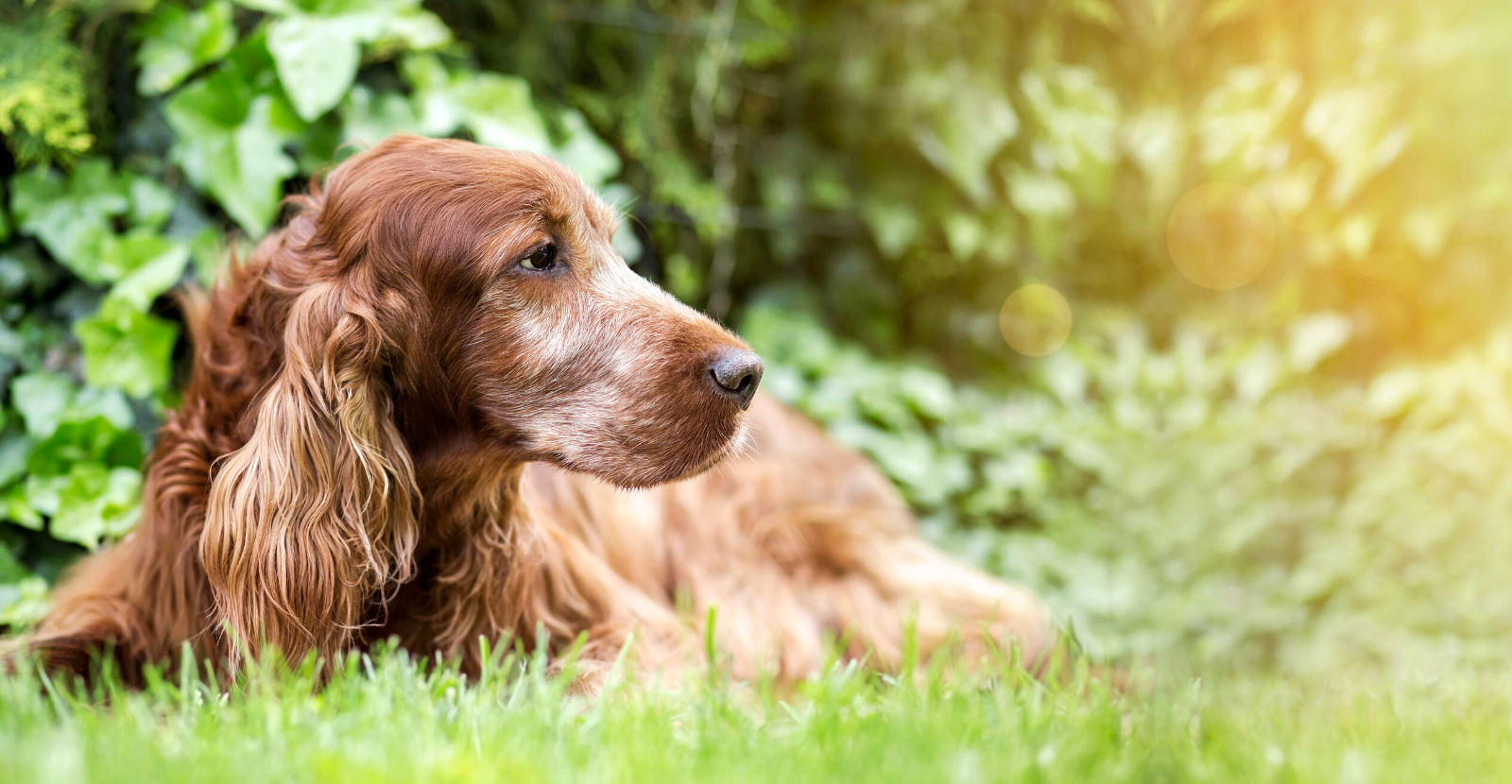 senior dog care US