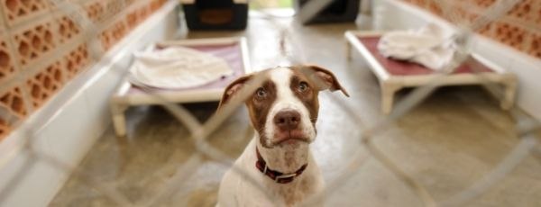Help Local Pet Shelters Now