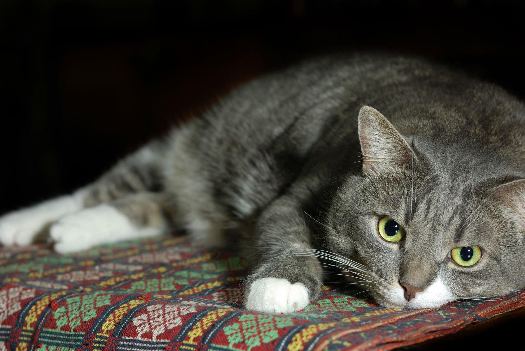 We-love-older-cats
