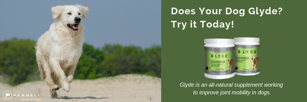 Does Your Dog Glyde? Try It Today?