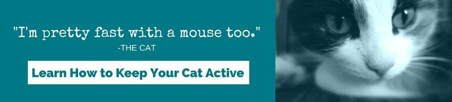 I'm pretty fast with a mouse too. Learn how to keep your cat active.