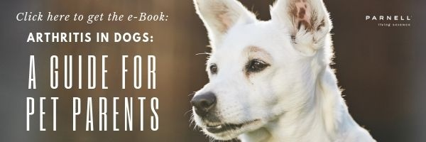 Get this FREE e-book: Arthritis in Dogs